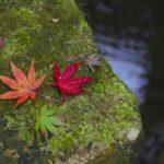 紅葉と苔むした岩