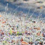うっすらと霜の大地