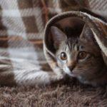 こたつ布団と猫